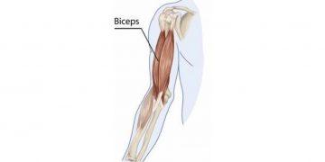Bicep strain rehabilitation.